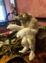 werewolfhowl2